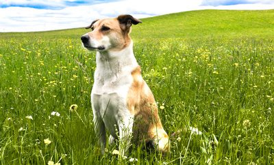 Vitality And Quality Of Life For Our Pets