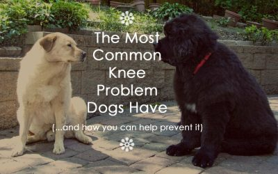The Most Common Knee Problem Dogs Have