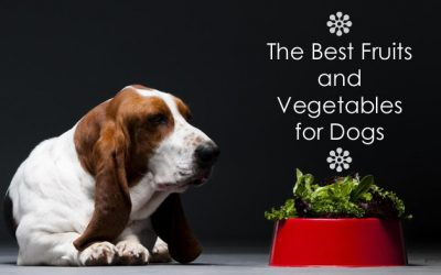 The Best Fruits and Vegetables for Dogs