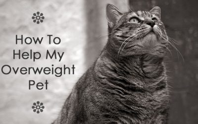 How To Help My Overweight Pet