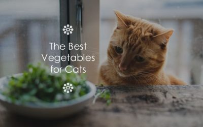 The Best Vegetables for Cats