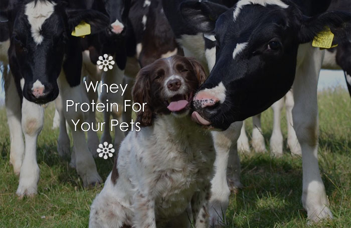 Whey Protein For Your Pets