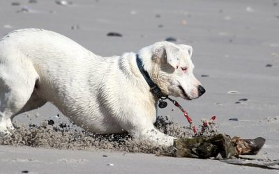 Preventing Joint Disease in Your Dog