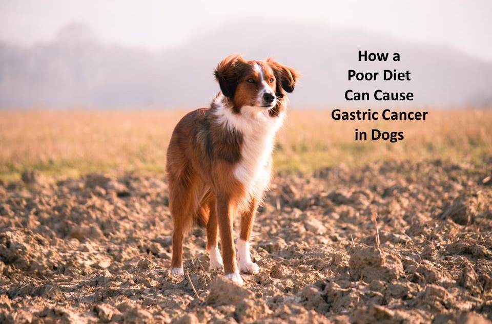 How Feeding Your Dog the Right Diet Can Avoid Gastric Cancer
